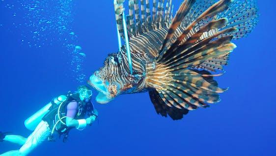 Barrier Reef Conservation