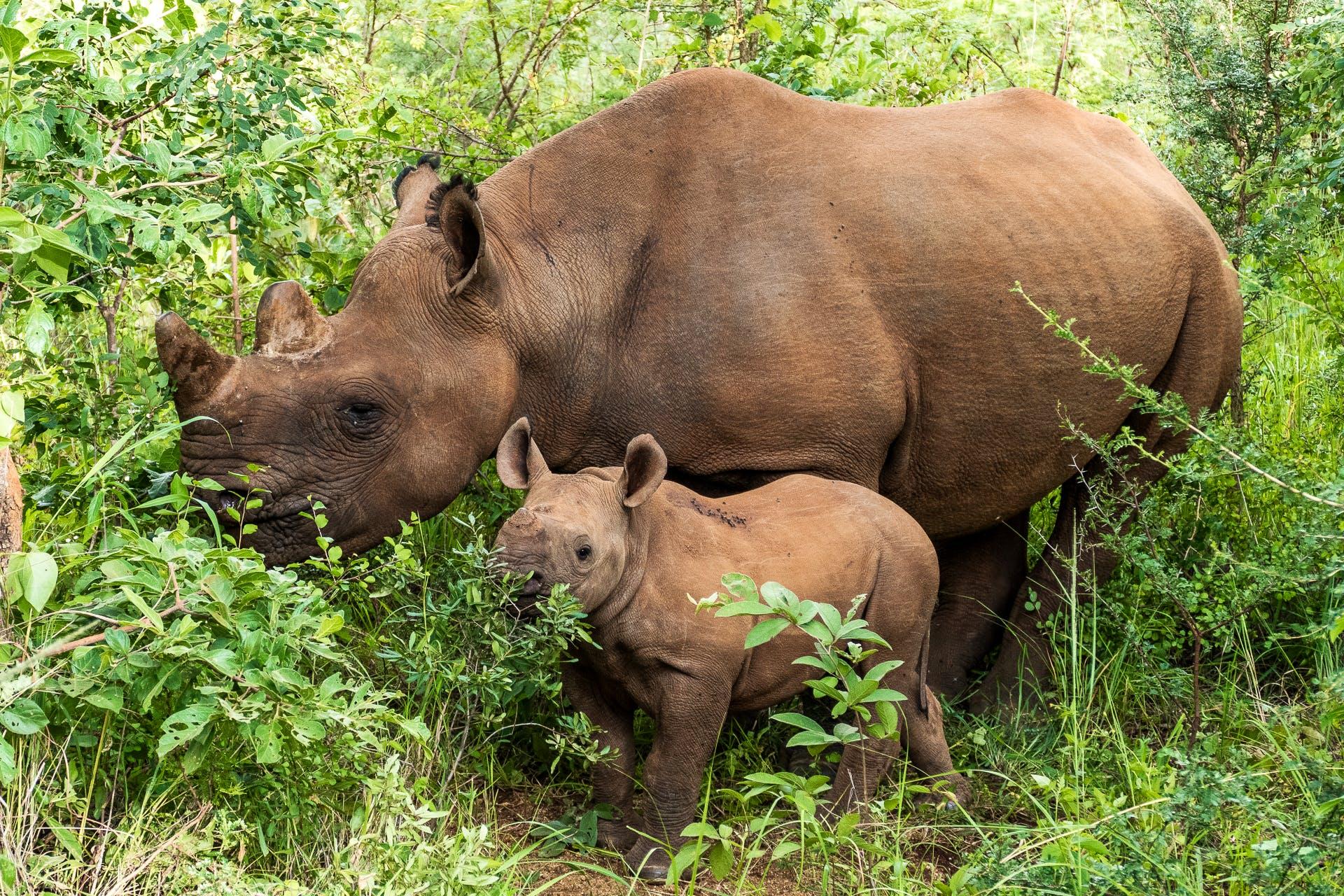 Rhino and Elephant Conservation