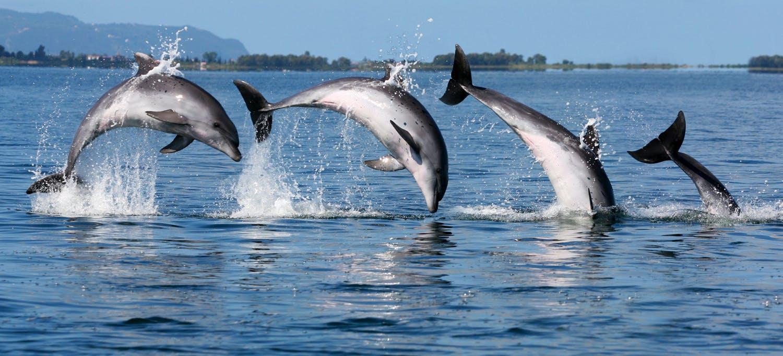 Coastal Dolphin Conservation
