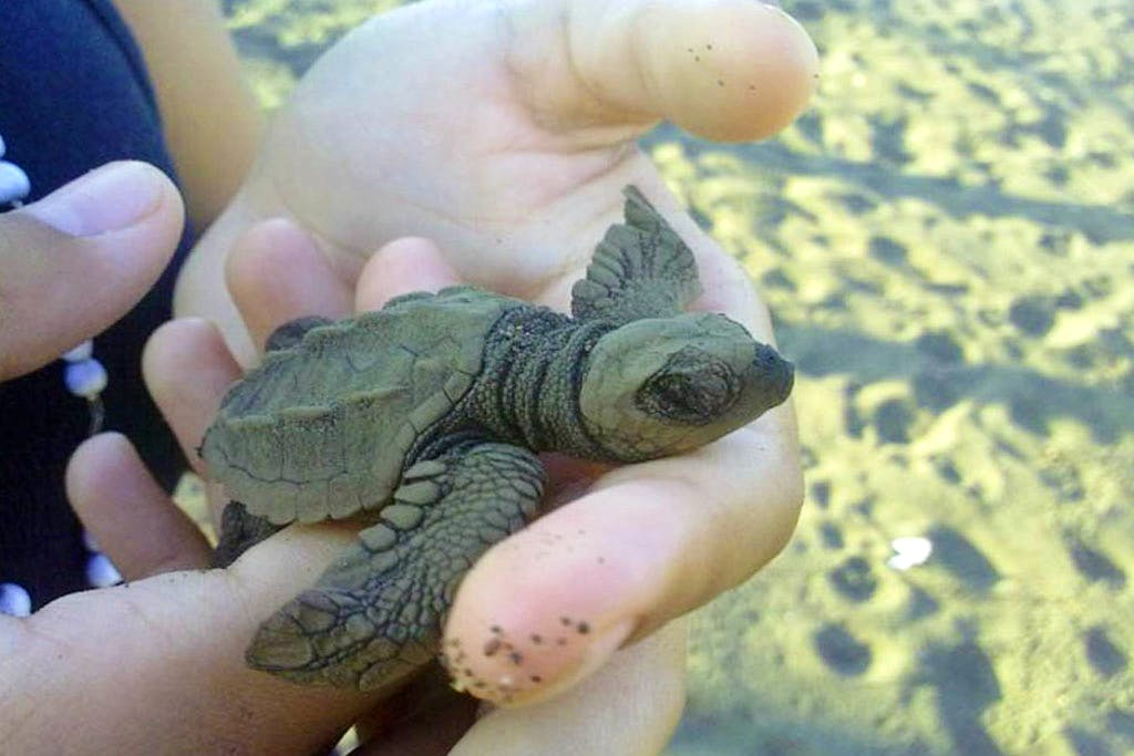 Help Save Sea Turtles