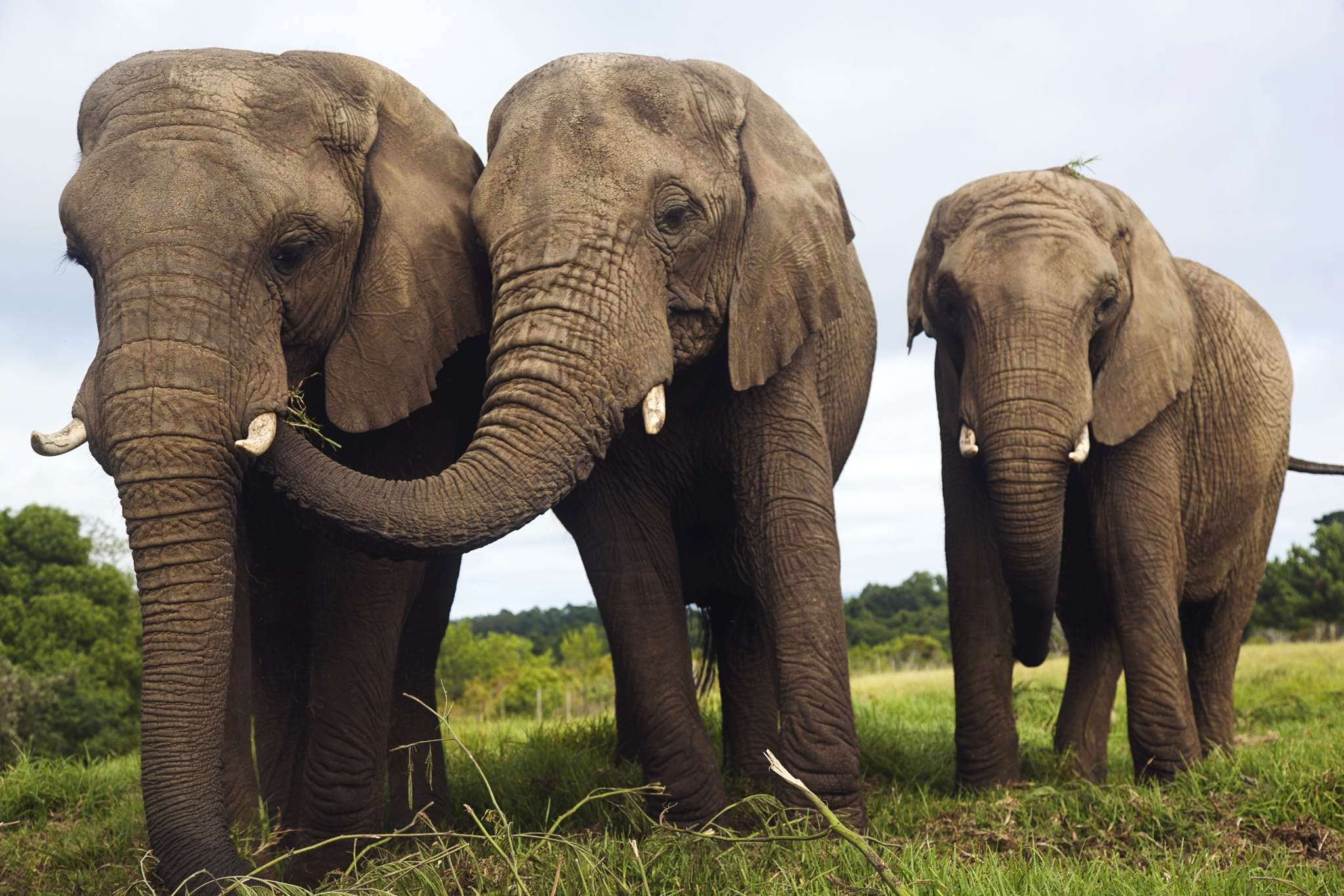 African Elephant Conservation & Education