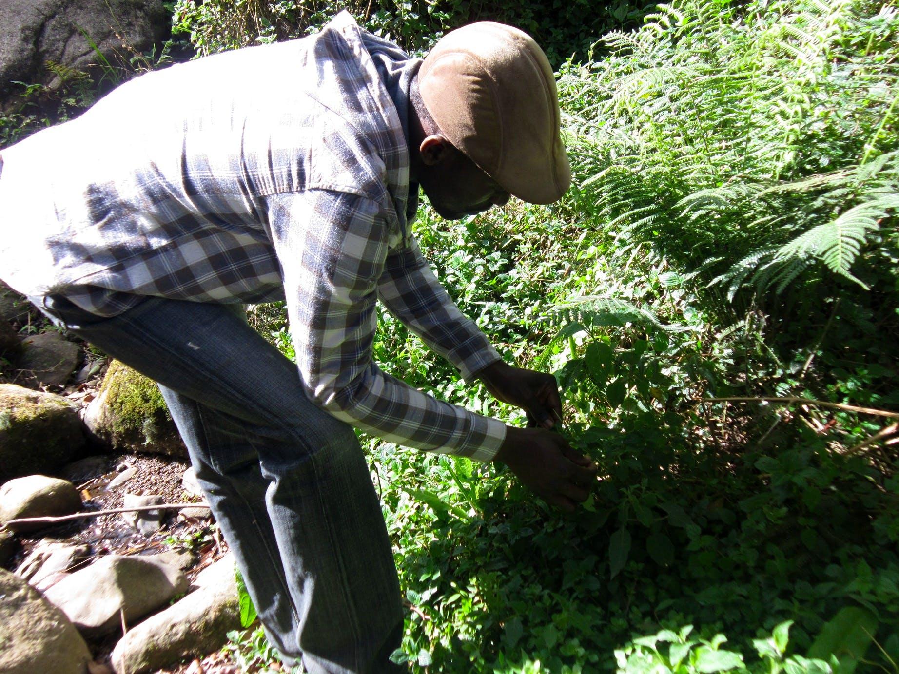 Develope a Community Herbarium