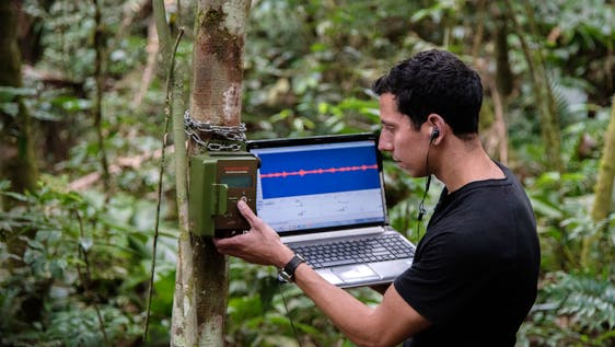 Bioacoustics Researcher