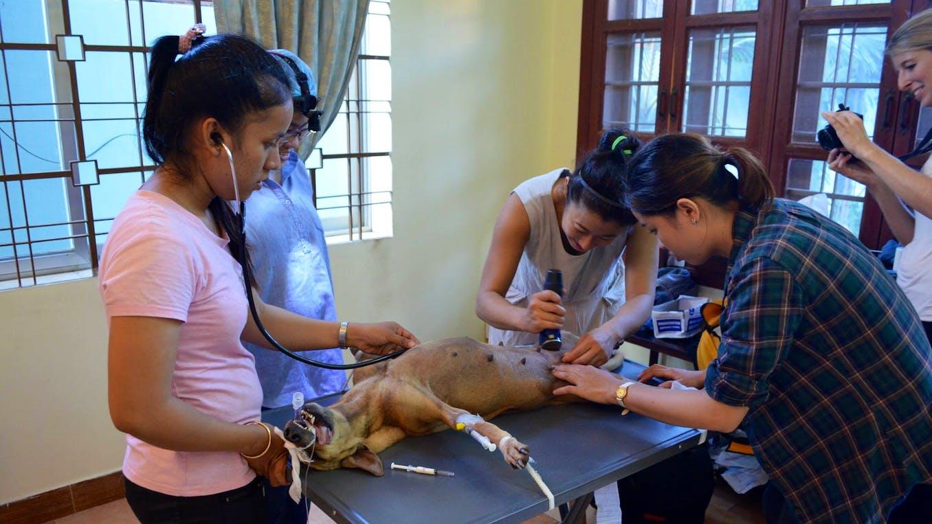 ▷ Animal Rescue | Volunteer in Cambodia 2019