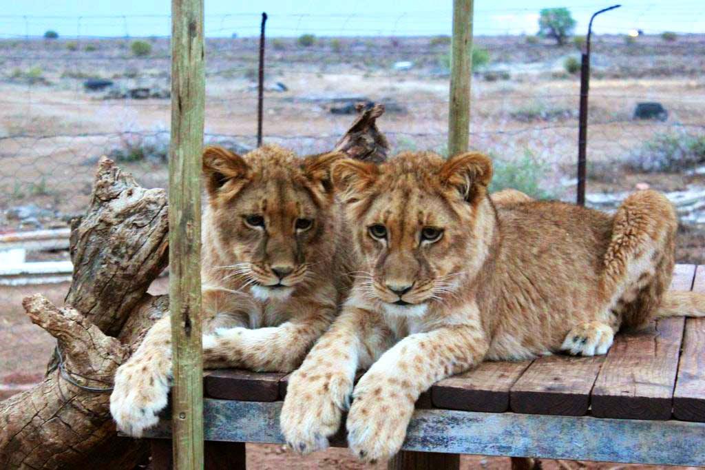 Wild Cat Protection