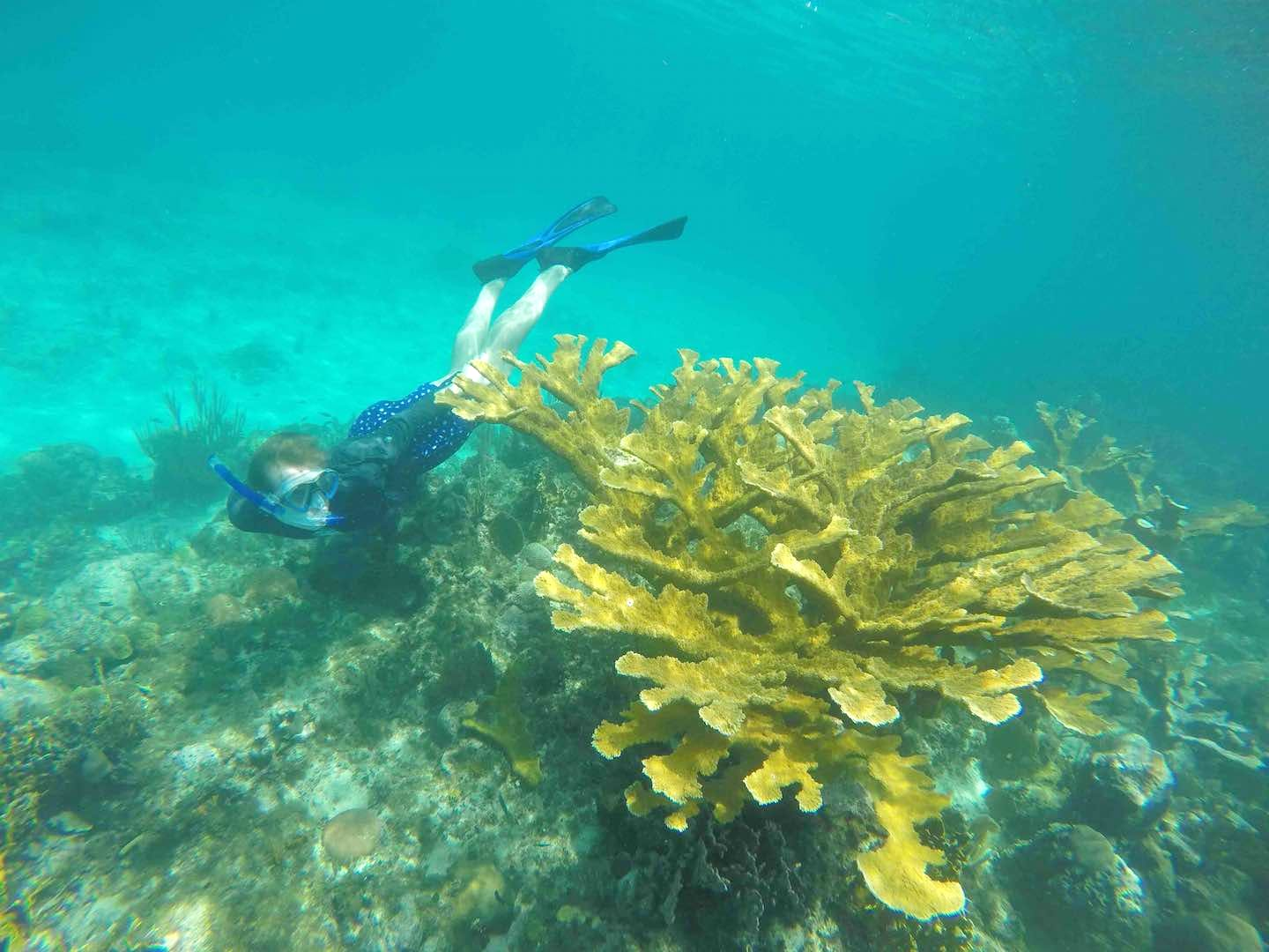 Reef and Costal Habitat Conservation Assistant