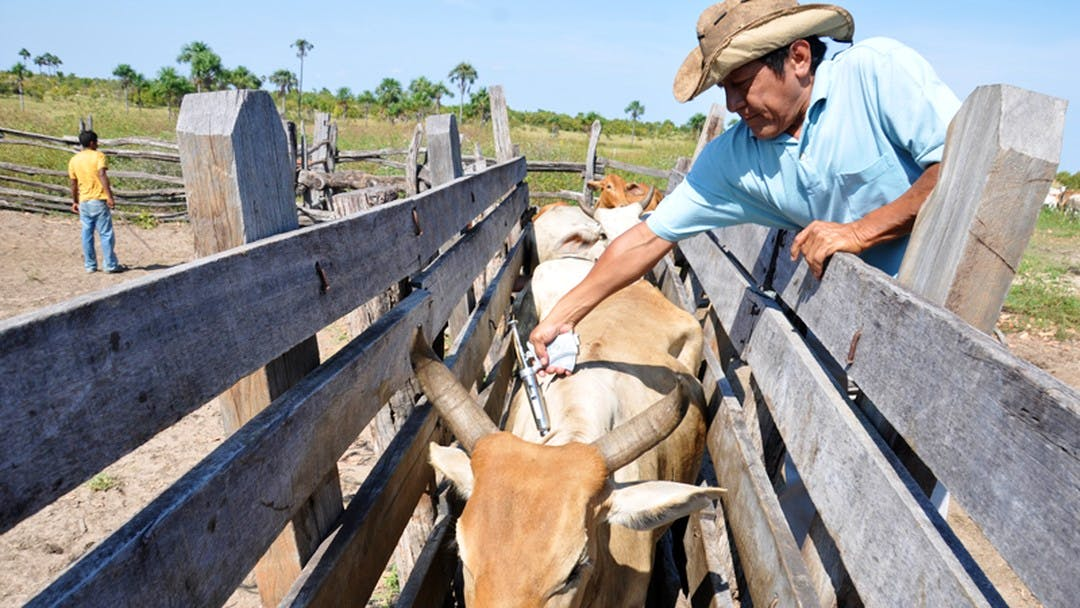 Savannah Cattle & Horse Ranch Hand