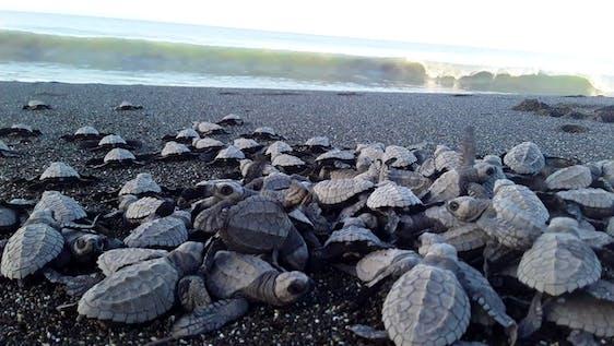 Sea Turtle Protecter