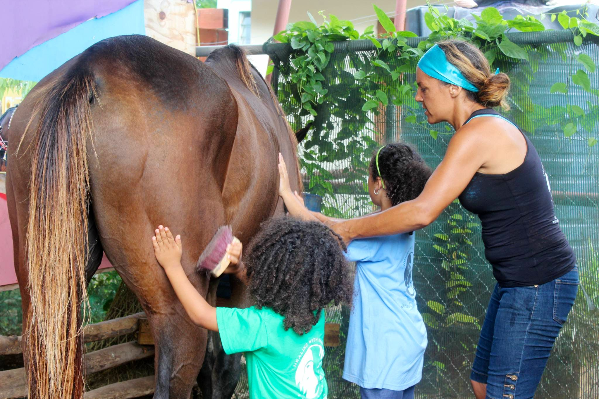 Equine Therapy Assistant