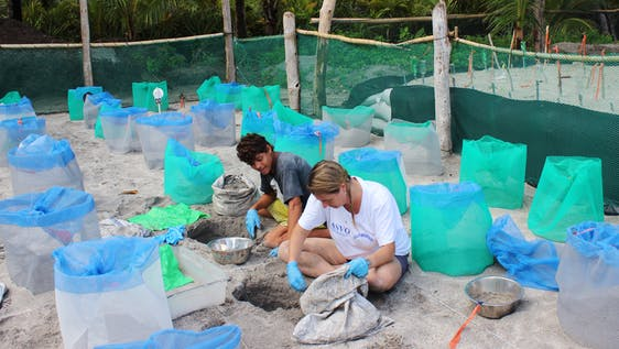 Sea Turtle Conservation Assistant