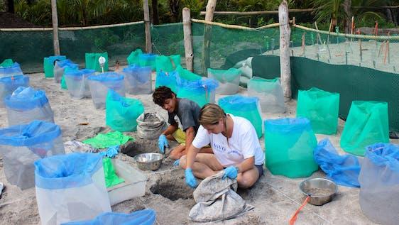 Sea Turtle Conservation Assistant