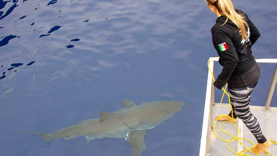 Shark Research Internship