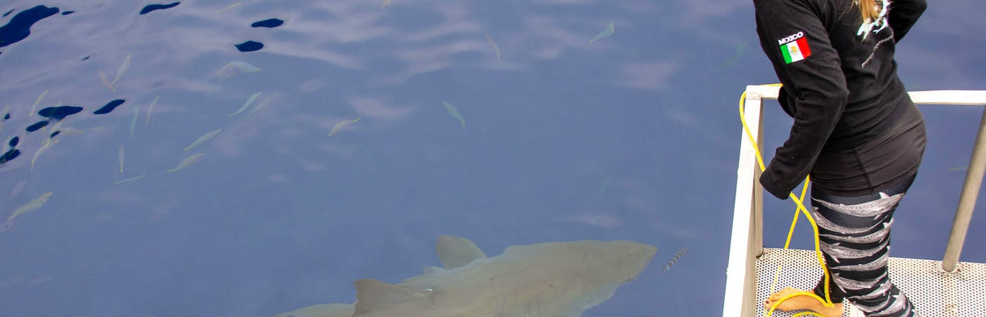 Shark Research Internship