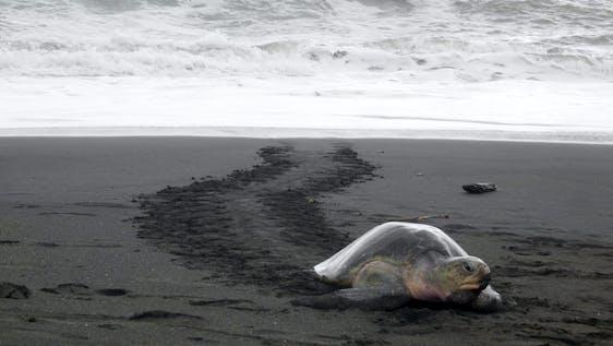 Save Turtles and Sloths