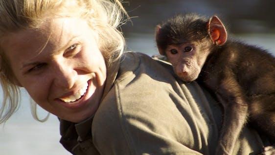 Baboon Orphan Caretaker