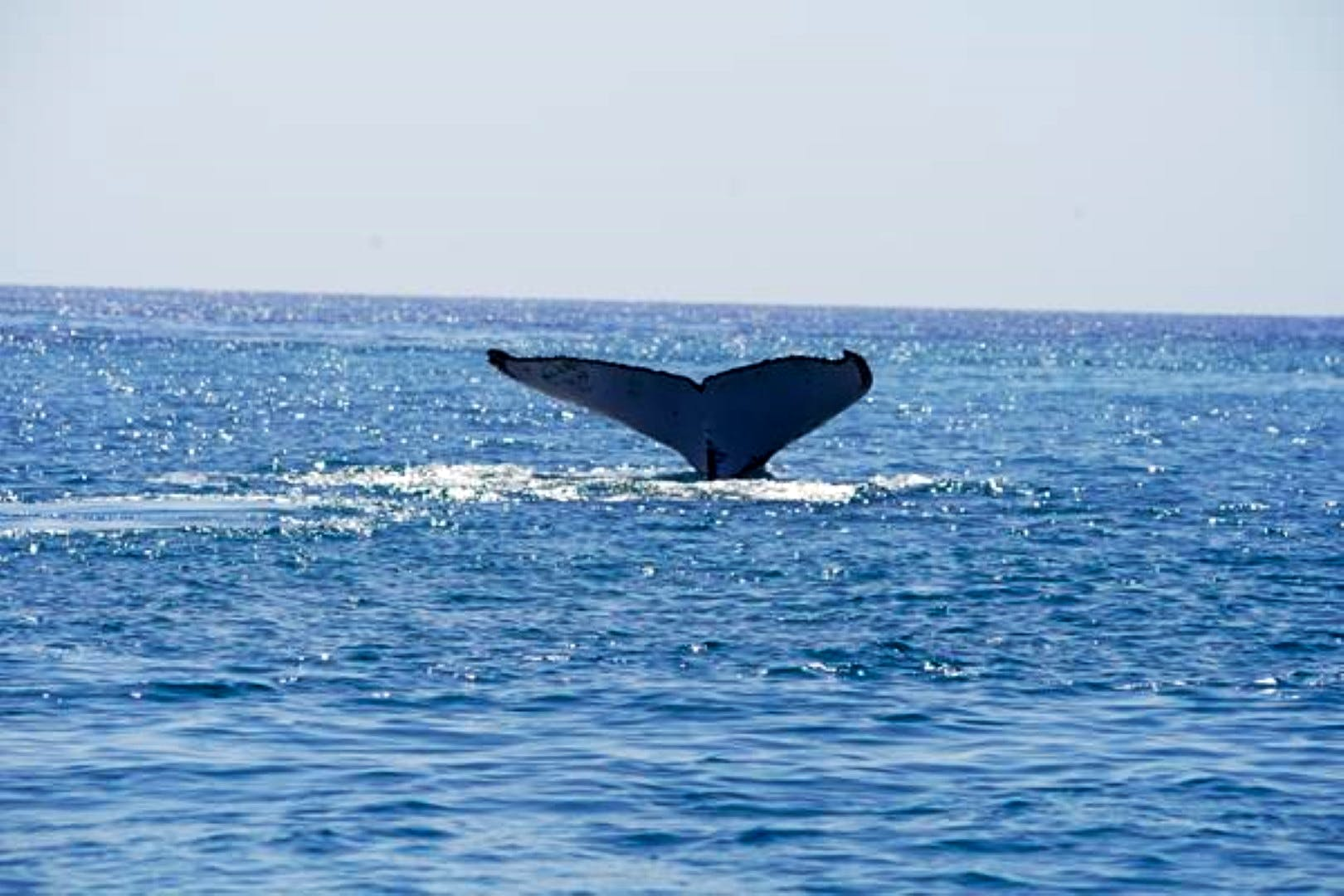 Open-Water Whale Research