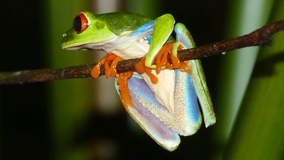 Reptile & Amphibian Diversity Research