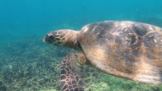 Sea Turtle Conservation Monitor