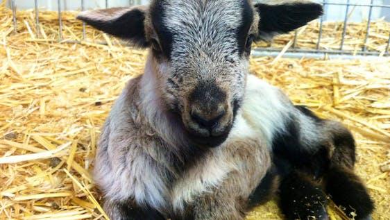 Farm Animal Rescue and Caretaker