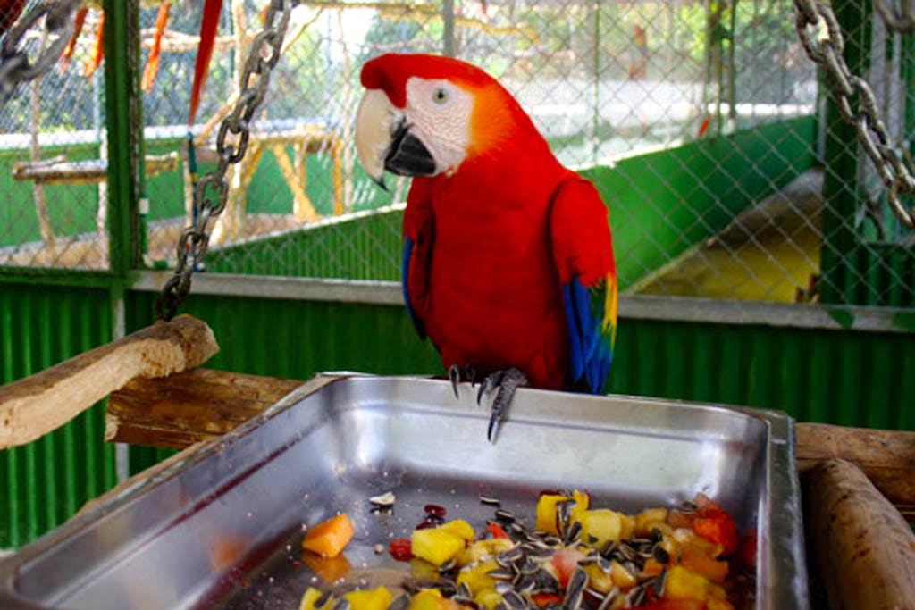 Take Care of Parrots
