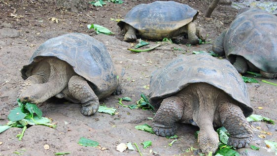 Giant Tortoise & Sea Lion Conservation