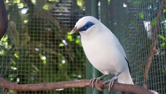 Assistant in Starling Conservation Center
