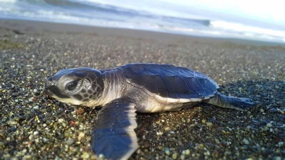 Sea Turtle conservation, protection, and awareness