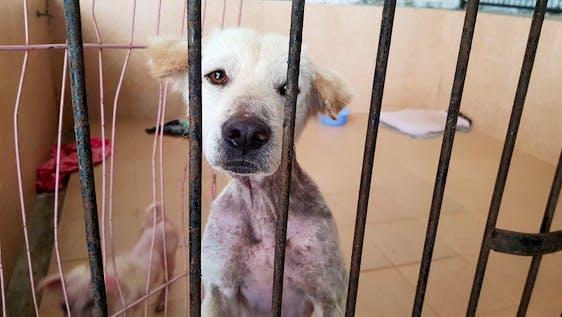 Stray Dog Shelter and Rehabilitation Bali