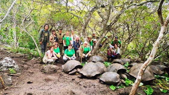 Sea Turtle Conservation Group