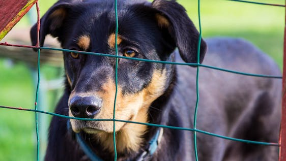 Support a shelter for stray dogs