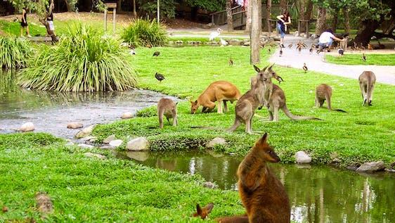 Tropical Exotic Wildlife Caretaker