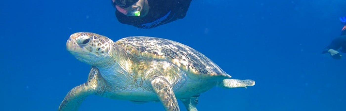 Sea Turtles Conservation Assistants