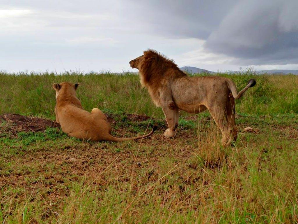 Wildlife Safari Experience & Day Care