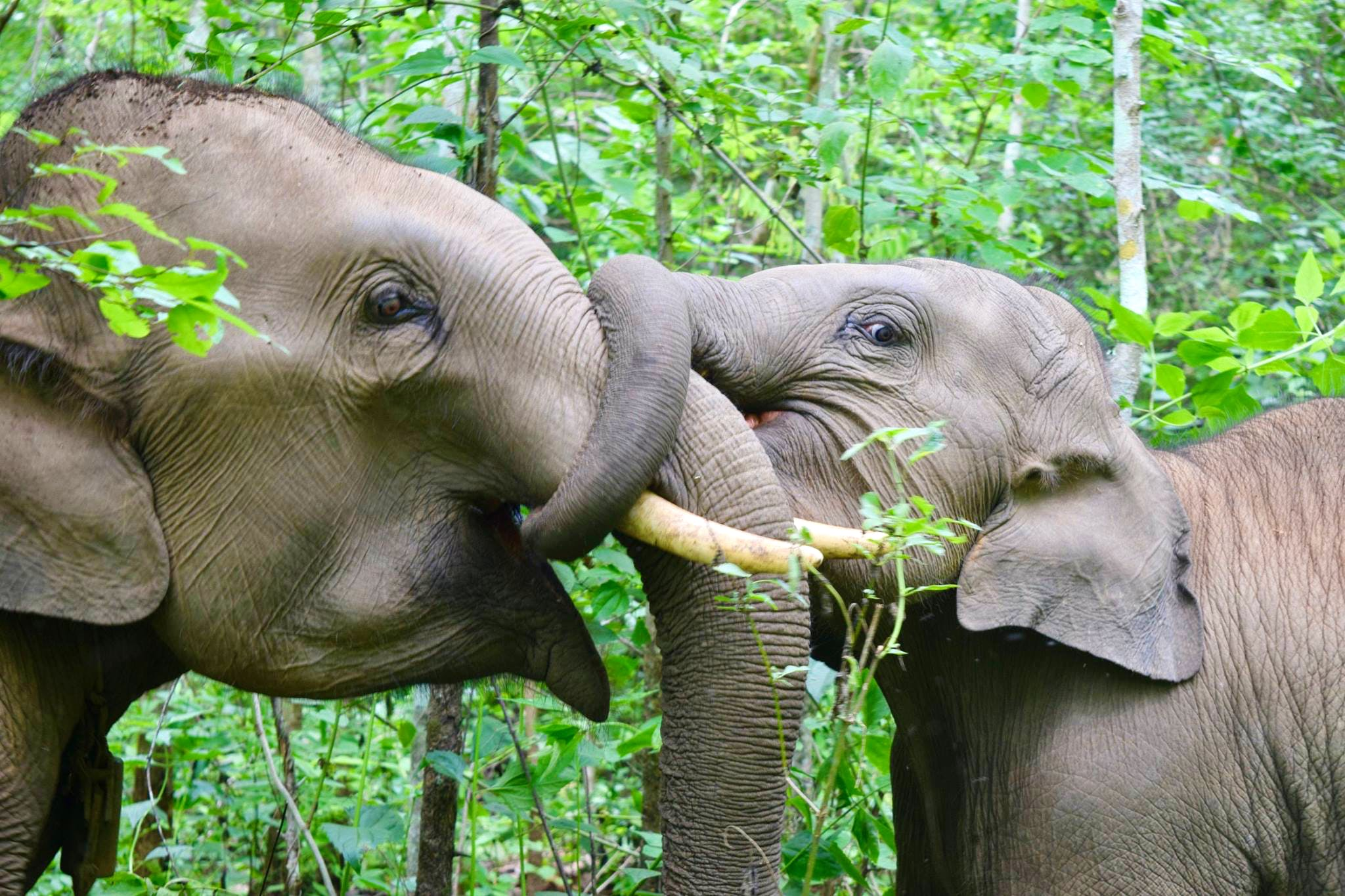 Elephant and Community Conservation