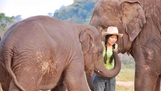 Forest Elephant Sanctuary