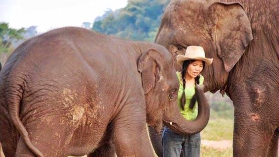 Forest Elephant Sanctuary