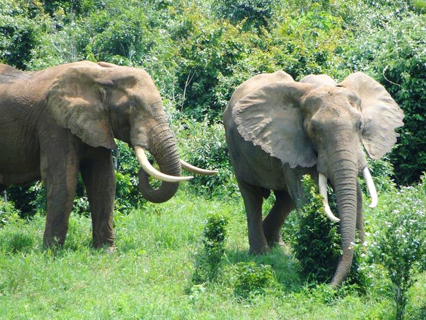 Elephant Community Conservation Assistant