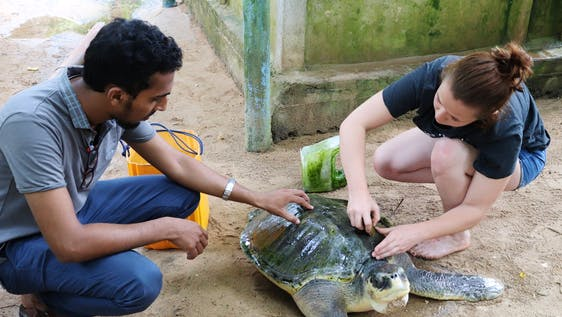 Support the Sea Turtle Ecosystem