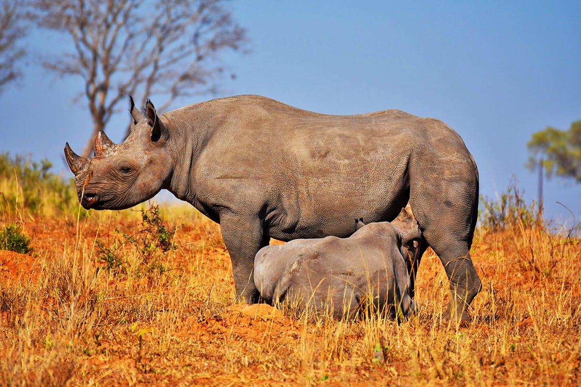 Elephant and Rhino Sanctuary Assistant