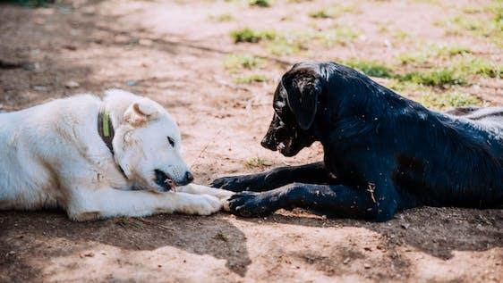 Animal Care Helper