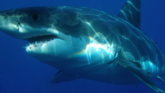 Shark & Marine Conservation EduTour