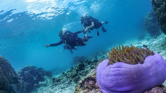 Marine Conservationist and Dive Training