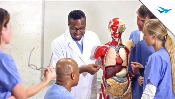 Hospital Internship for Graduates