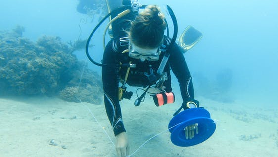 Marine Conservation & PADI Training for Teens