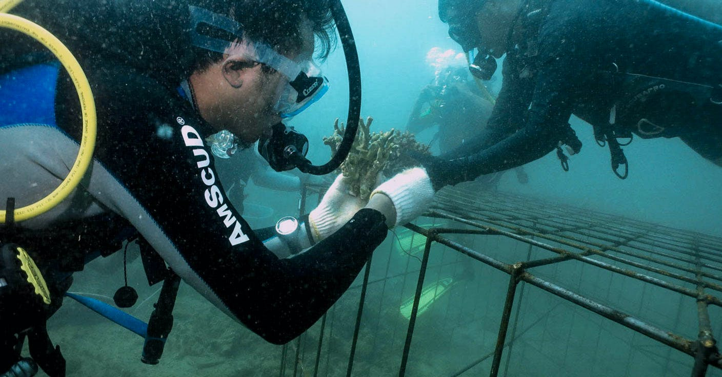 Coral Reef Restoration Course