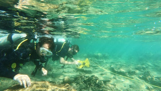 Volunteer Divers for Marine Conservation