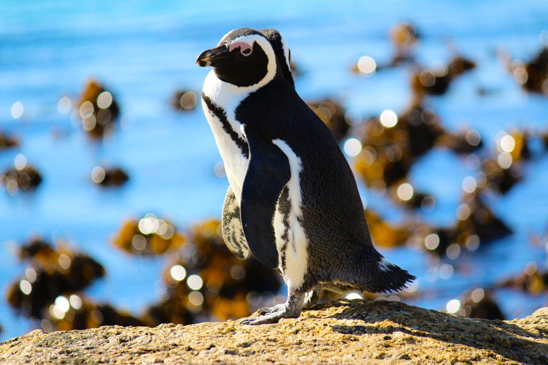 Penguin Conservation Helper