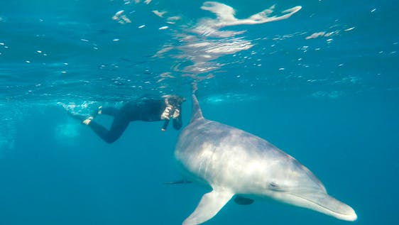 Dolphin Care Assistant Mozambique