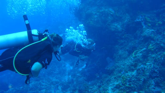 Marine Conservation & PADI Diving Internship