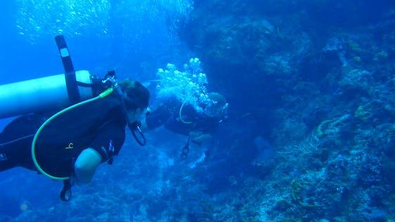 PADI Marine Conservation Internship